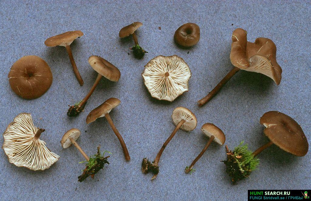 Украшение грибов фото и